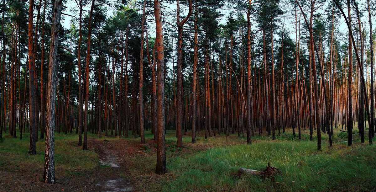 в чащу леса - Юрий Котов