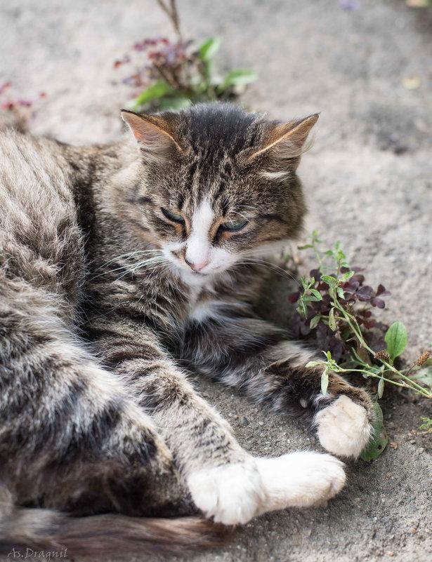 Котик - Астарта Драгнил