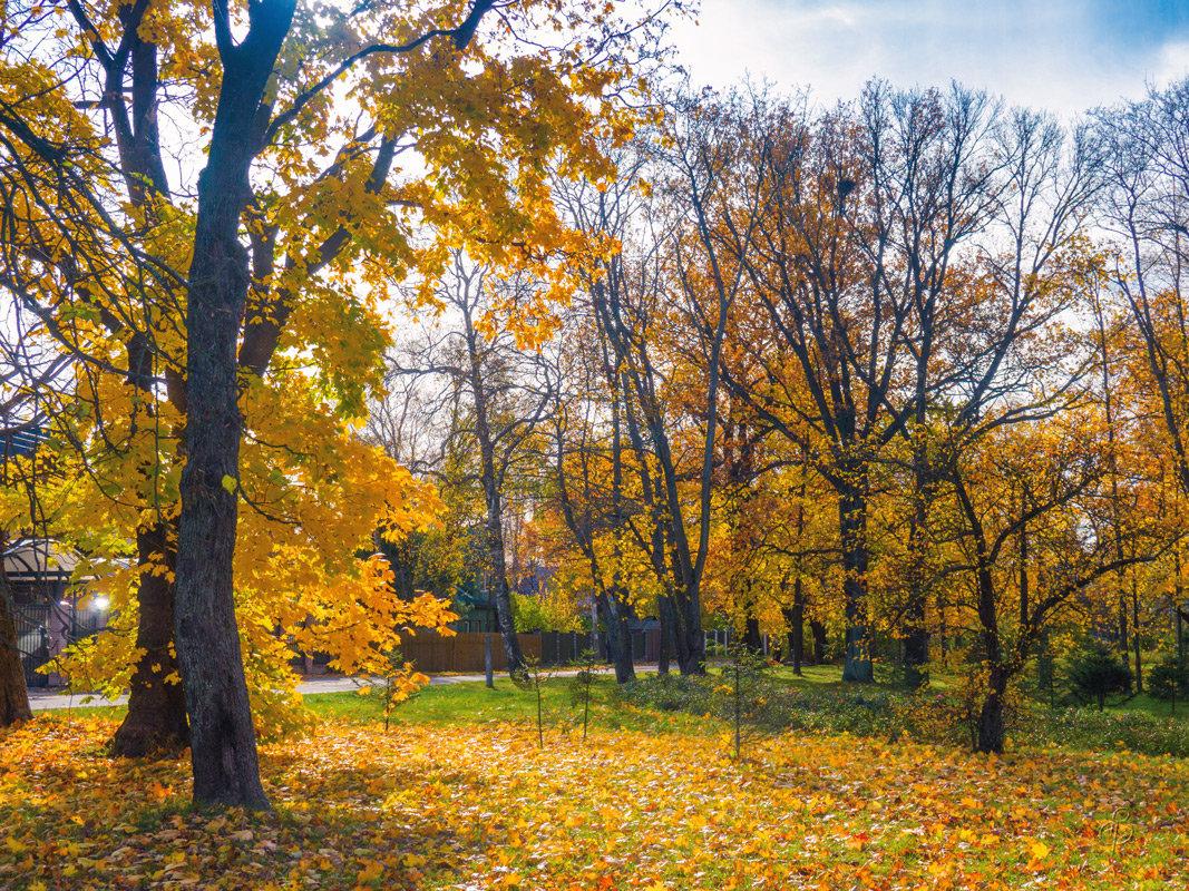 Осень в пригороде 4 - Виталий