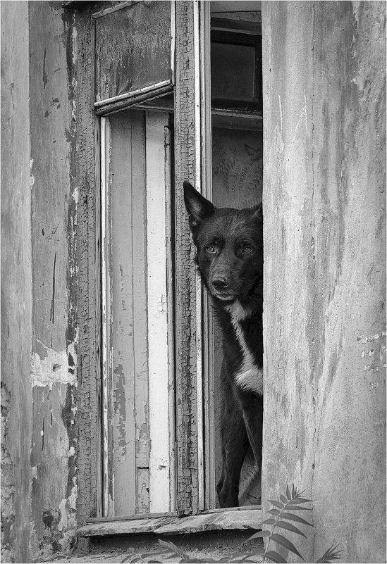 Одинокий сторож - Константин Сытник