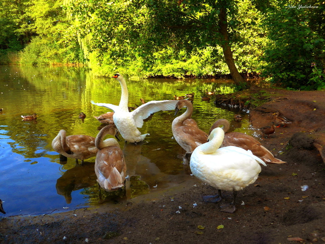 """Лебединое озеро (серия) Лебедь: """"Я так рад тебя видеть!"""" - Nina Yudicheva"""