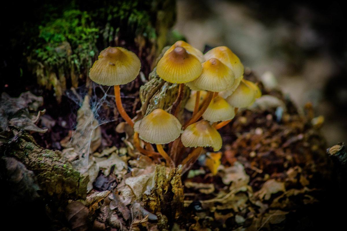 грибочки - олеся тронько