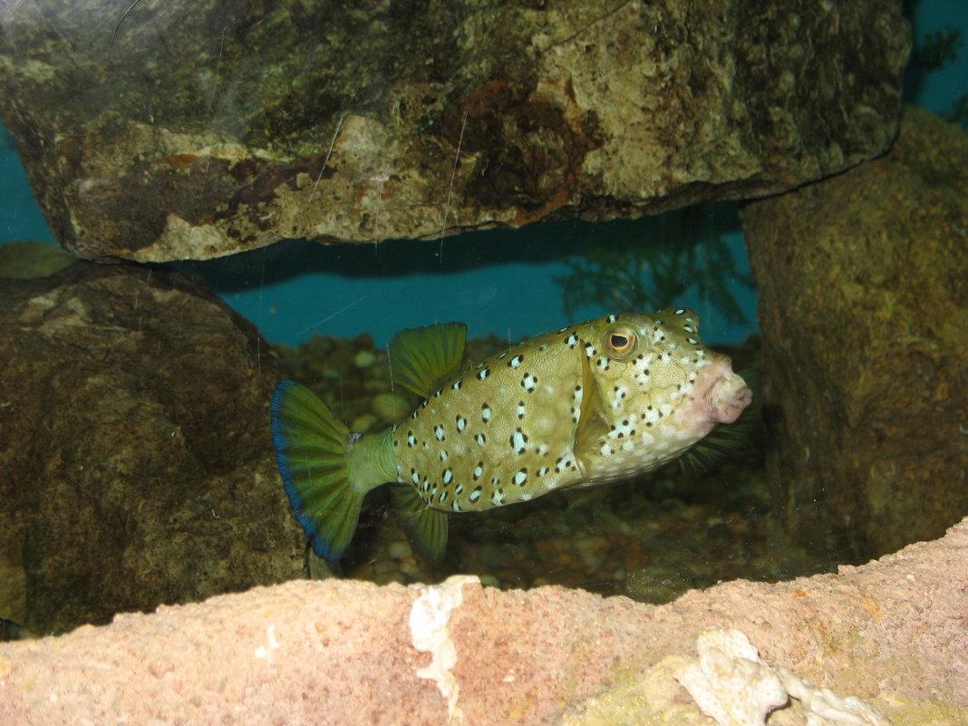 Рыба Красного Моря - Олег Савин