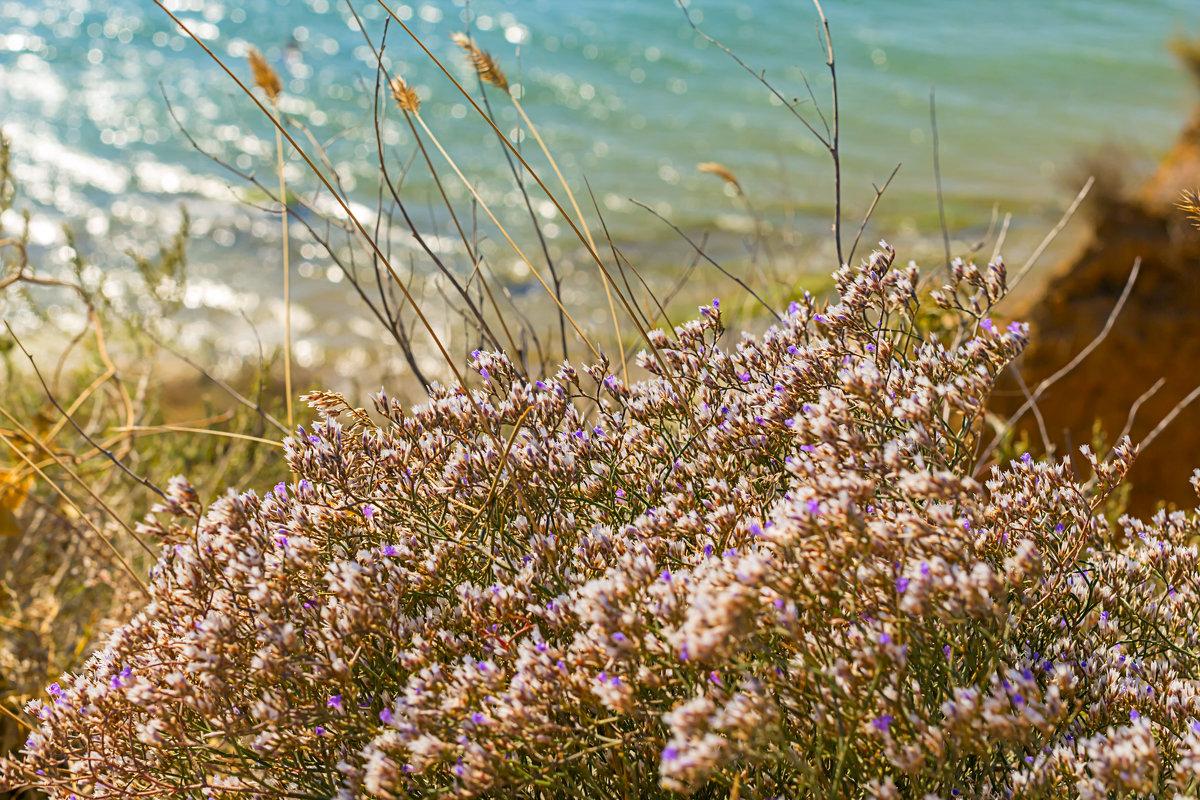 Цветы и море - Елена Васильева
