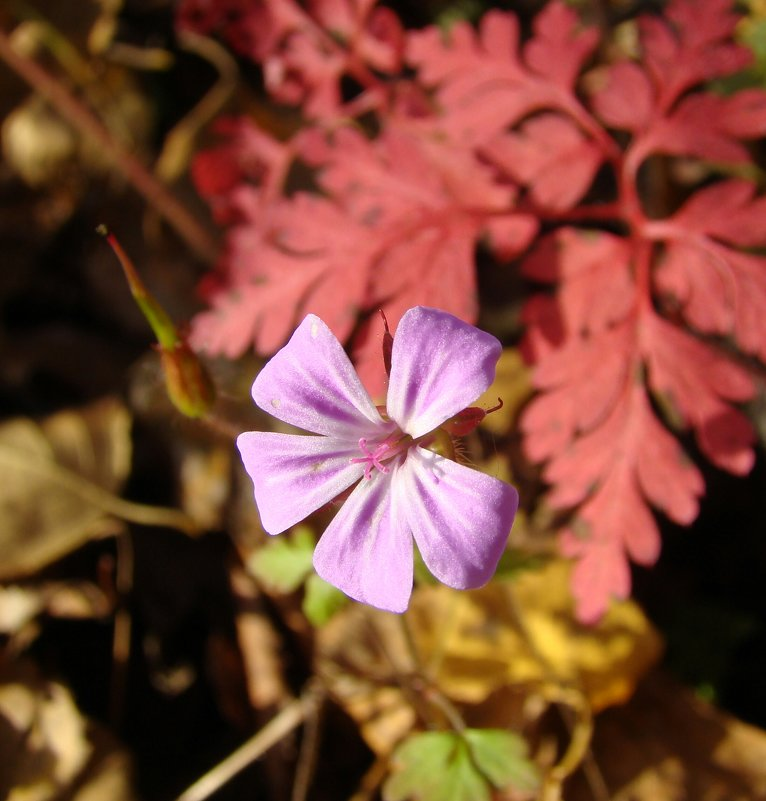 Аленький цветочек - Елена Якушина