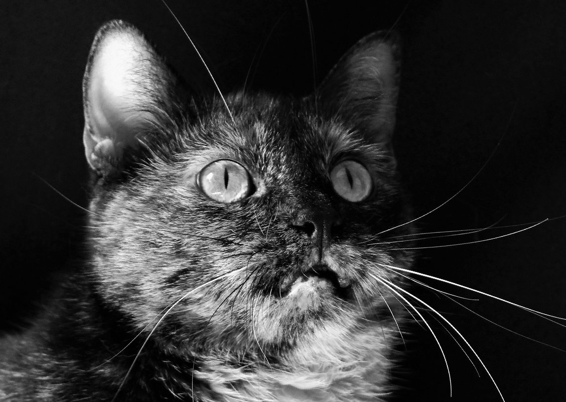Удивлённая кошка - Avada Kedavra!