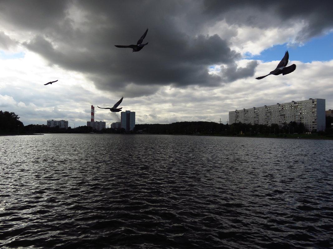 Рожденные летать летают - Андрей Лукьянов