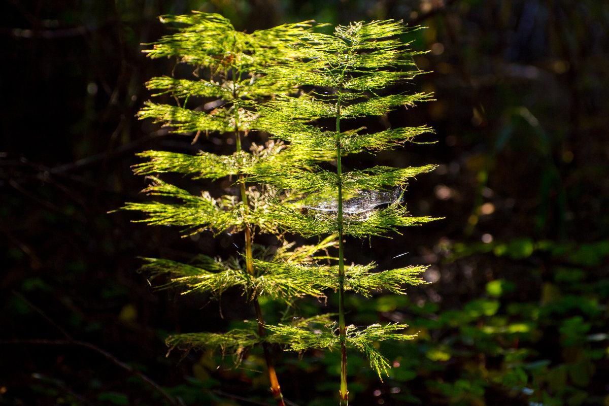 Сумрачный лес. - Vladimir Lazarev