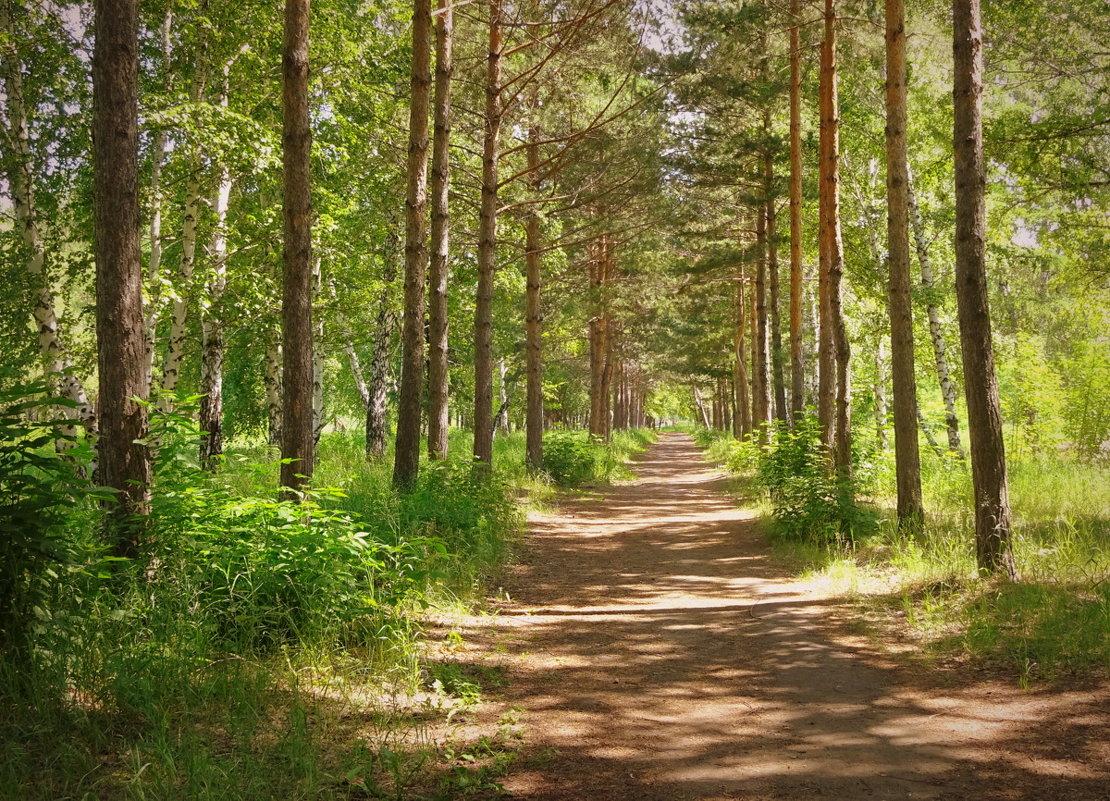 Мохнатый лес манит в свои владенья,где от жары спасет благая тень... - Елена Ярова