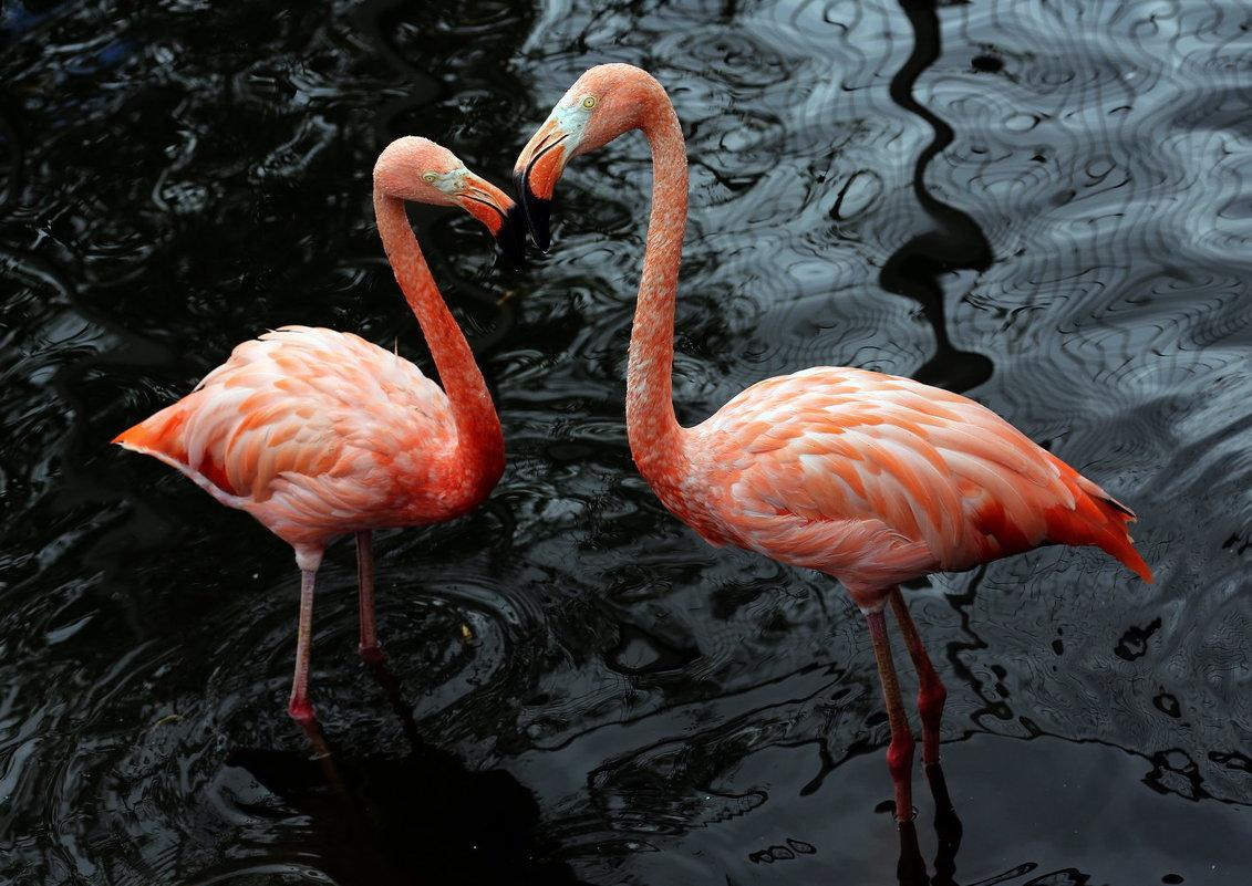 фламинго - Михаил Бибичков