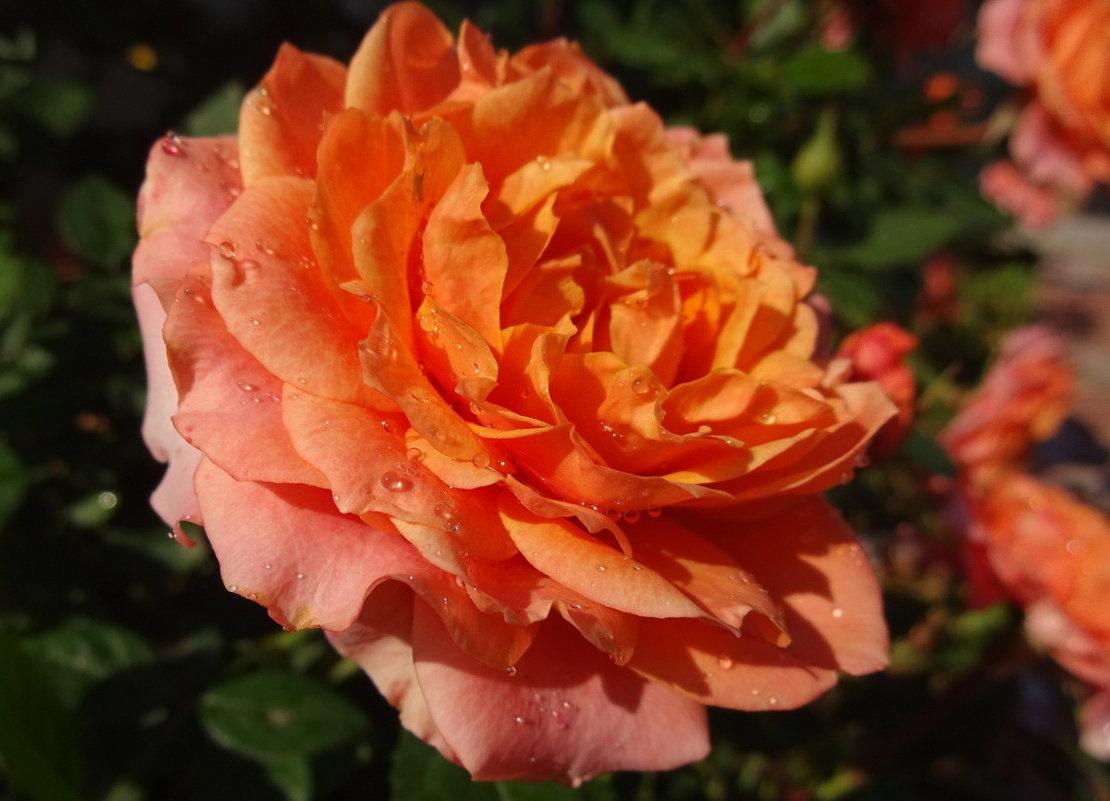 Яркий праздник солнца - Елена Ярова