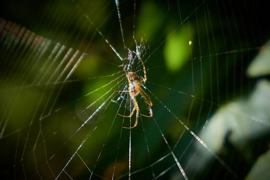 Паучок и паутинка - НикЛеод