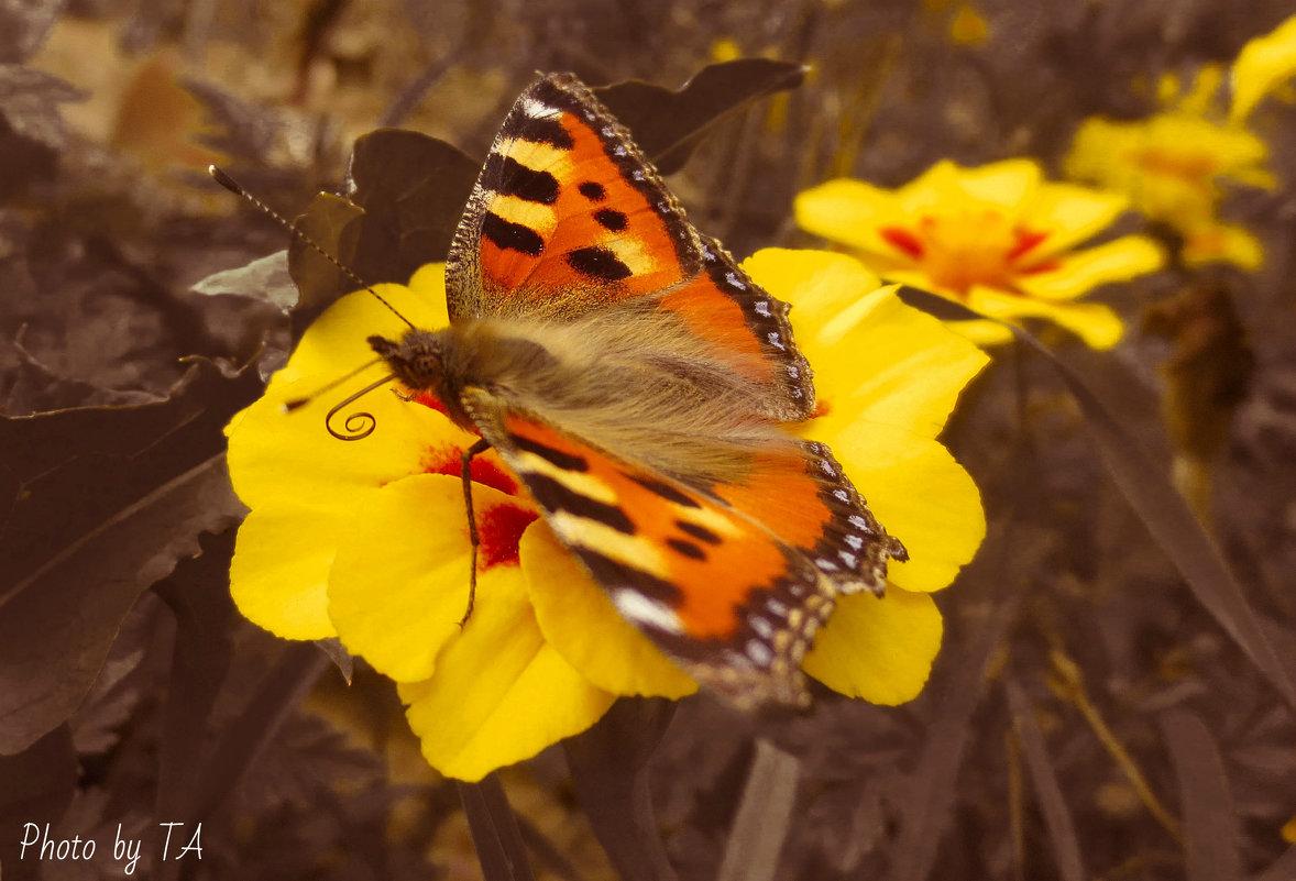 бабочка - Александра Тетерина