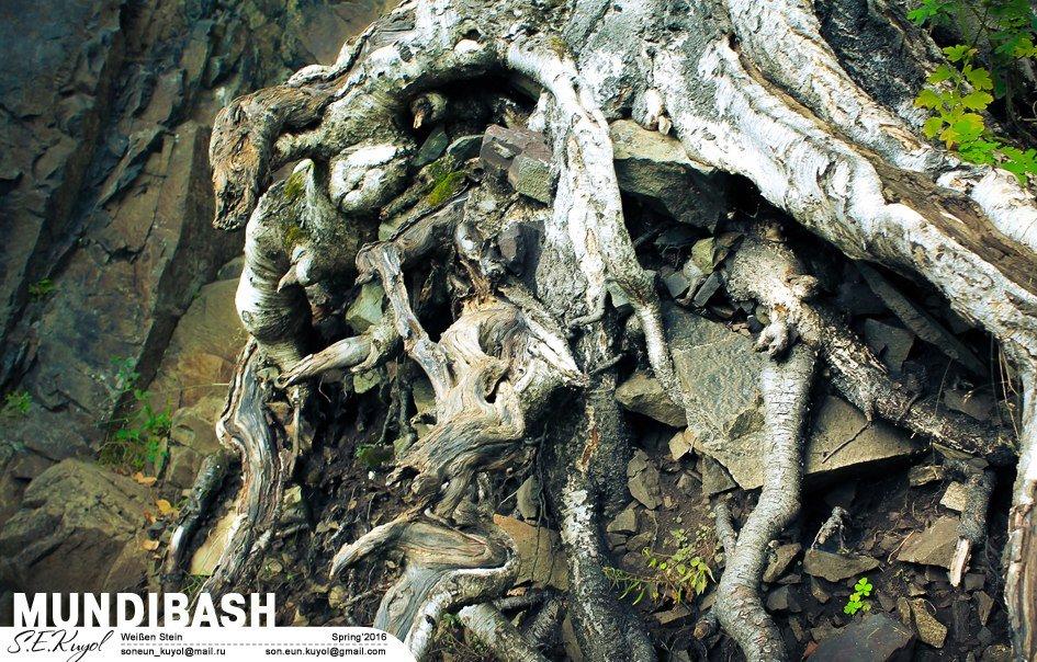 Железная хватка древесных корней - Son Eun Kuyol
