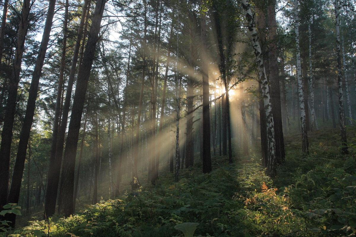 утро в лесу. - Владилен Панченко