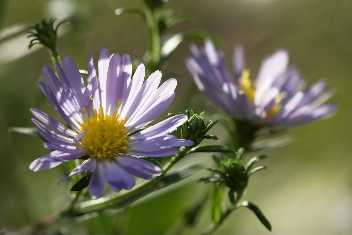 Просто цветы - Юрий Кольцов