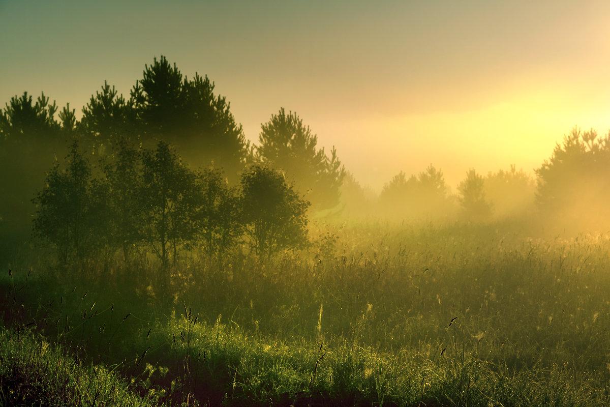 Утро туманное - Владимир Миронов