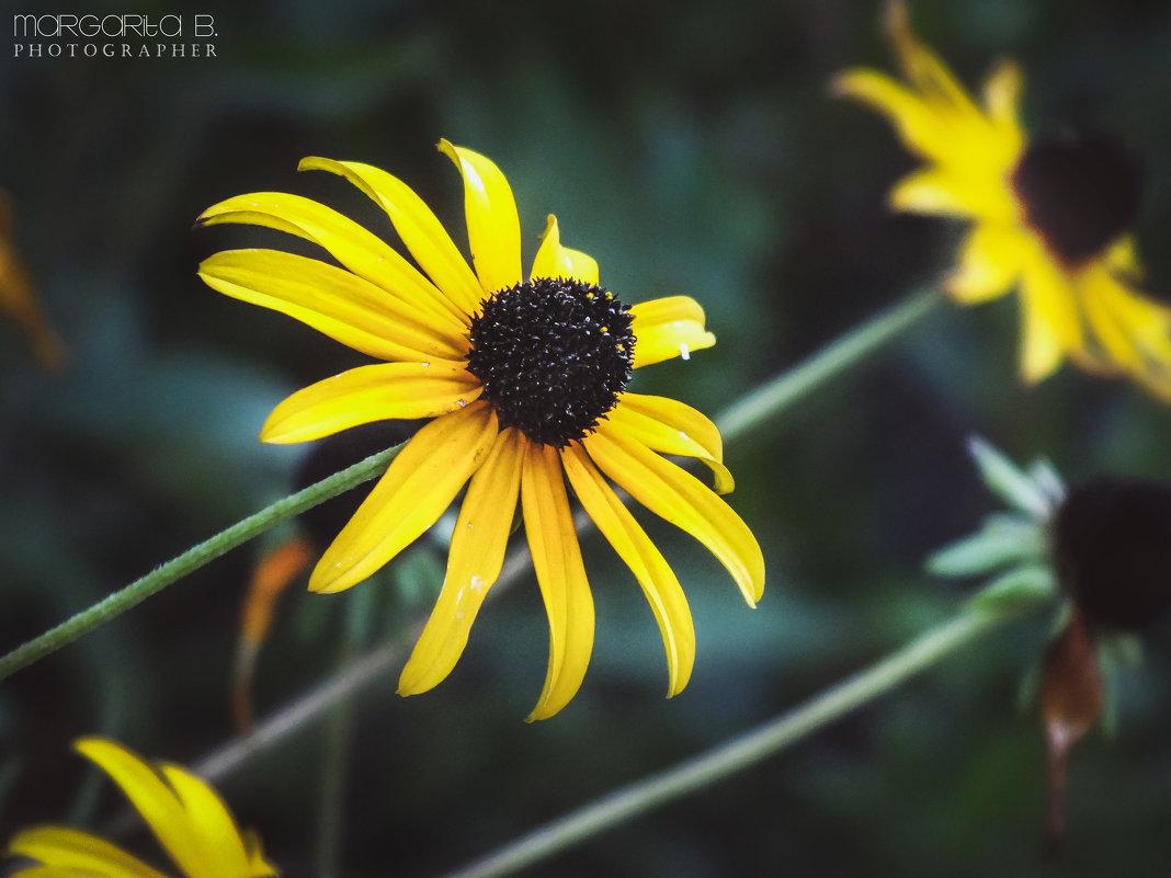 Контрастные цветы - Маргарита Б.