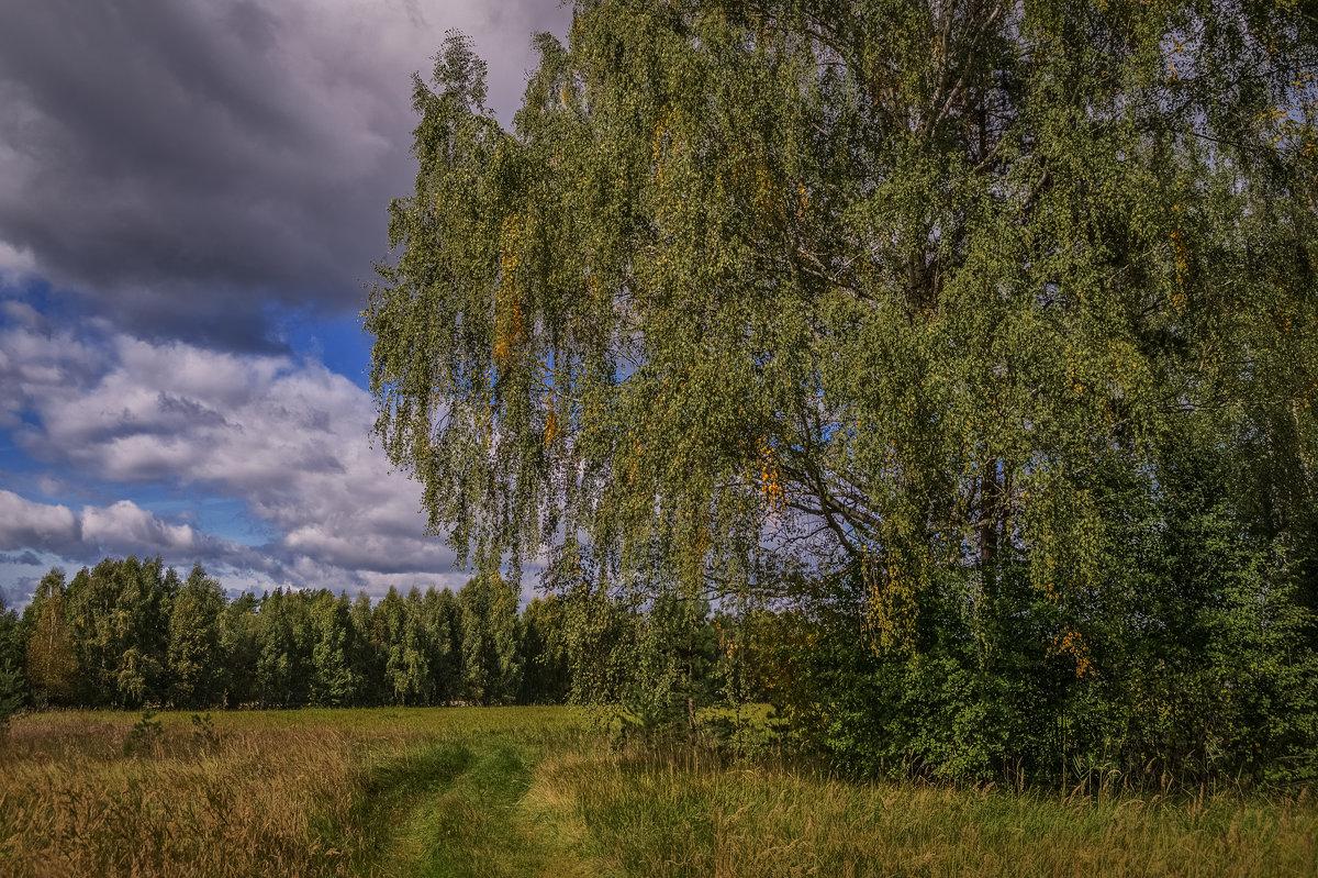 ****** - Андрей Дворников