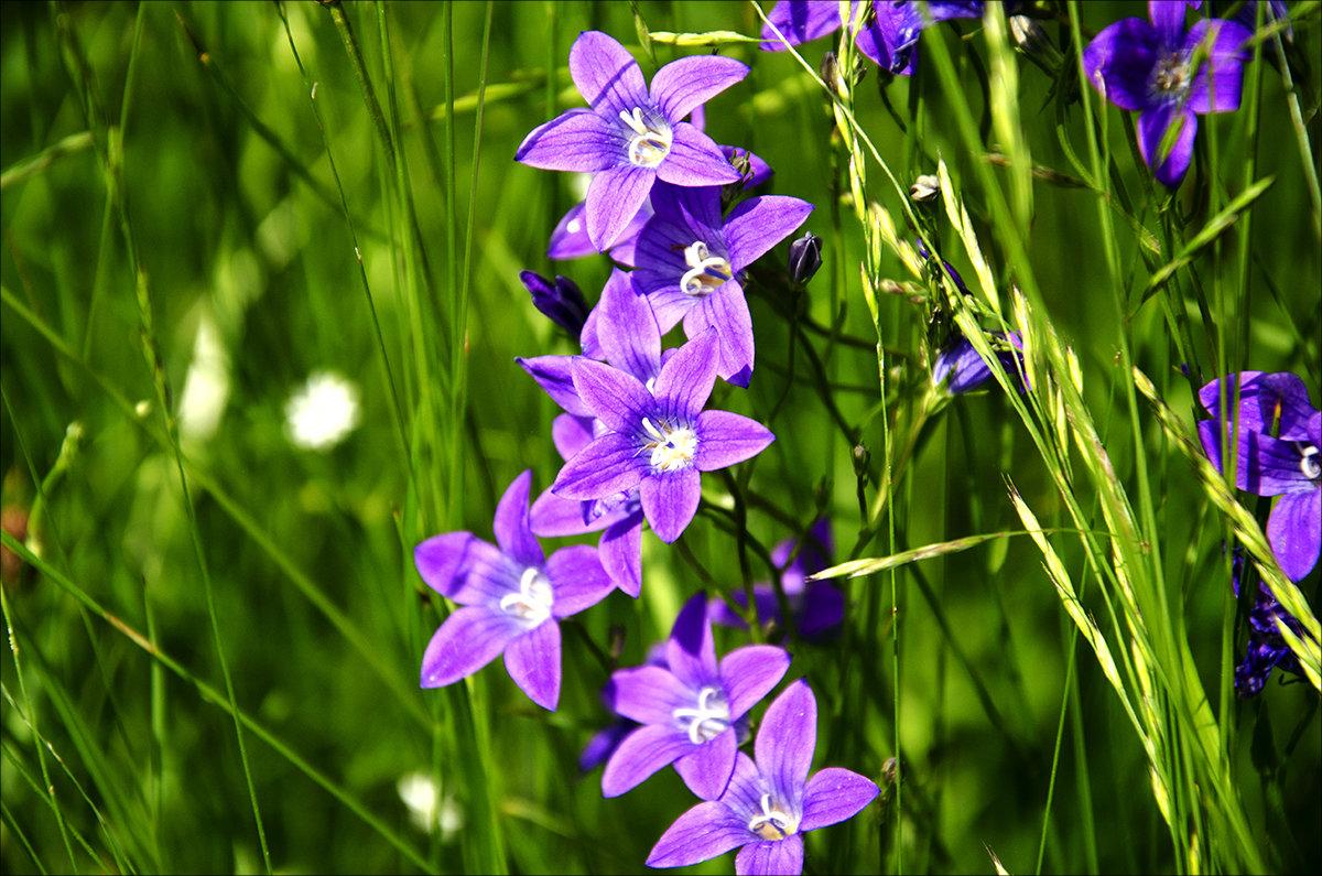 Луговые цветы - Vladimir
