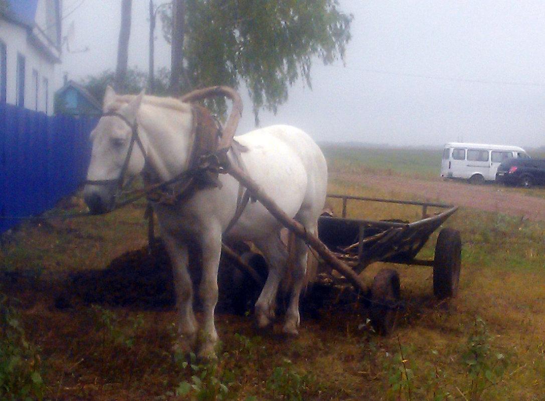 Рабочая лошадка - Владимир Ростовский