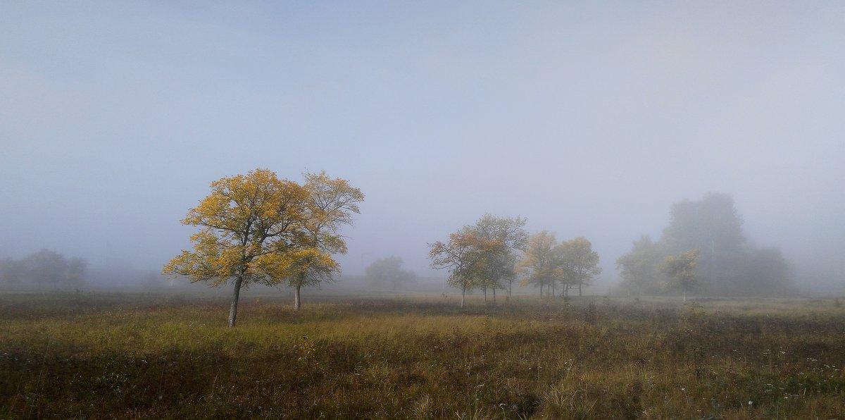 Утро туманное. Сентябрь... - Евгения Каравашкина