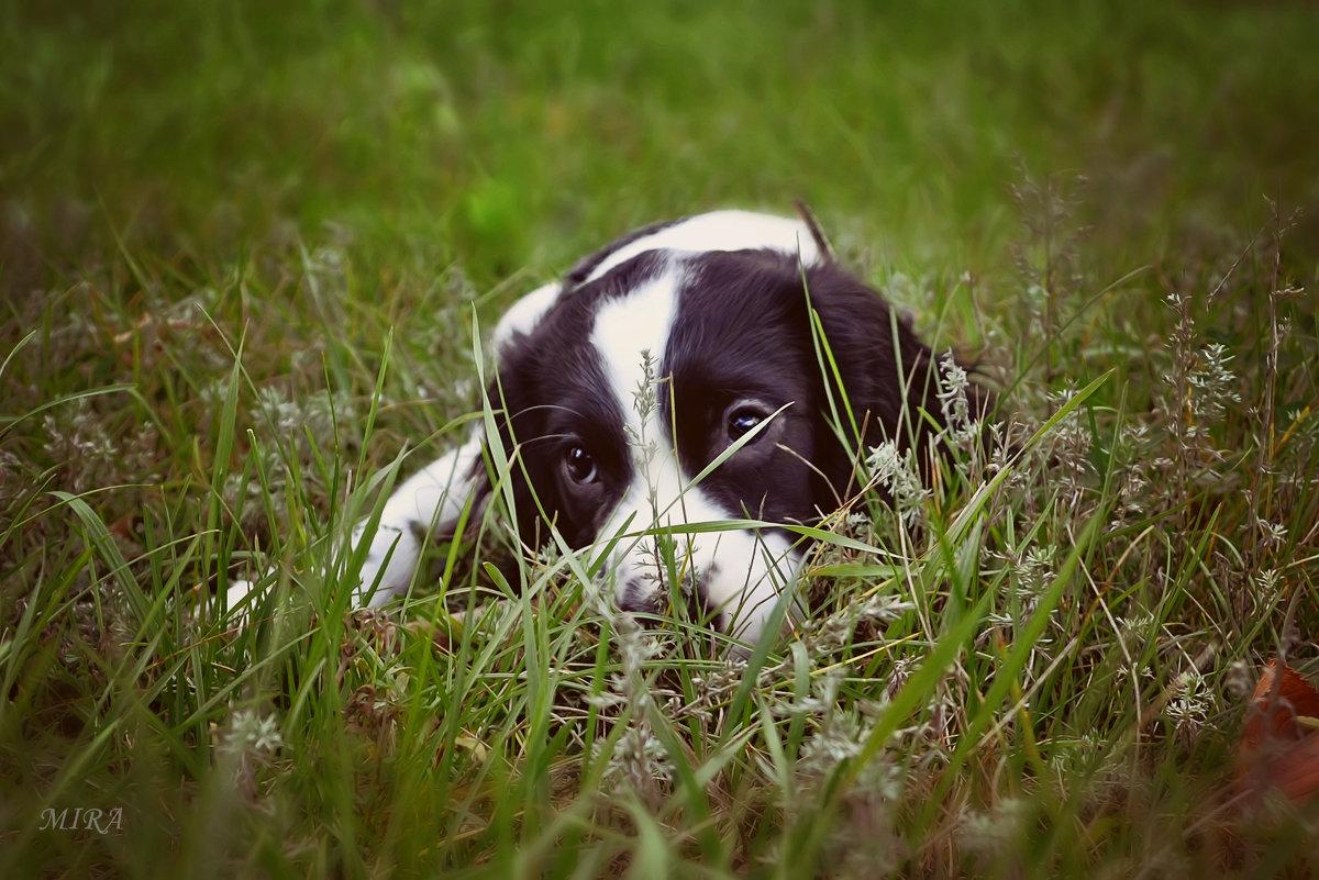 Думы мои думы... или о чем мечтает собака... - *MIRA* **