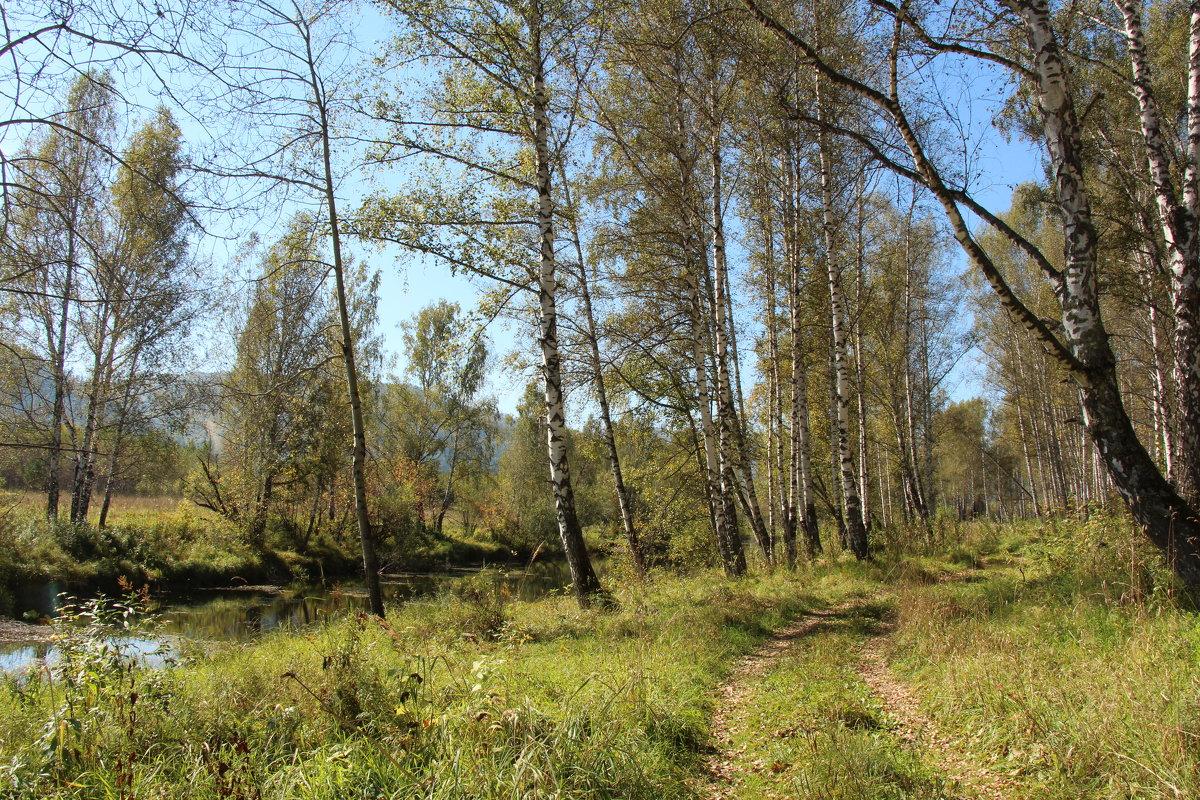 Дорога в осень - Лариса