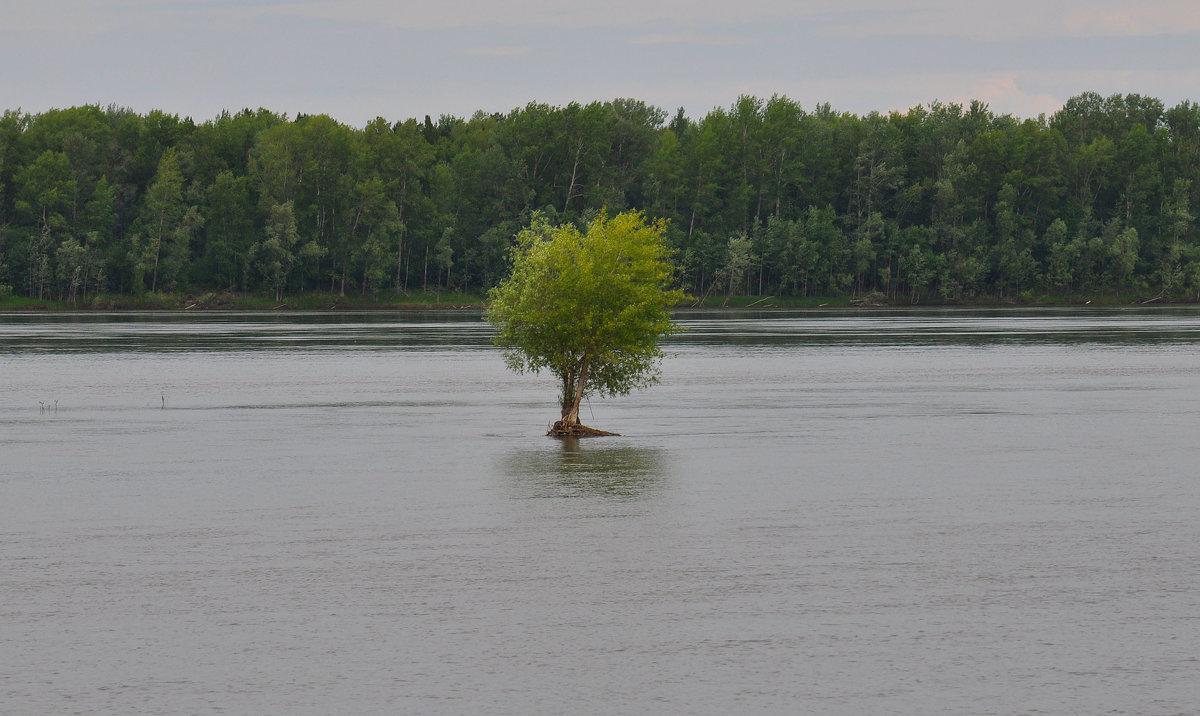 Одинокое дерево - Алексей http://fotokto.ru/id148151Морозов