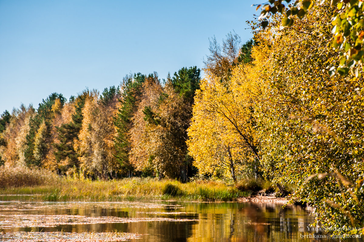 Осень золотая - Яна Старковская