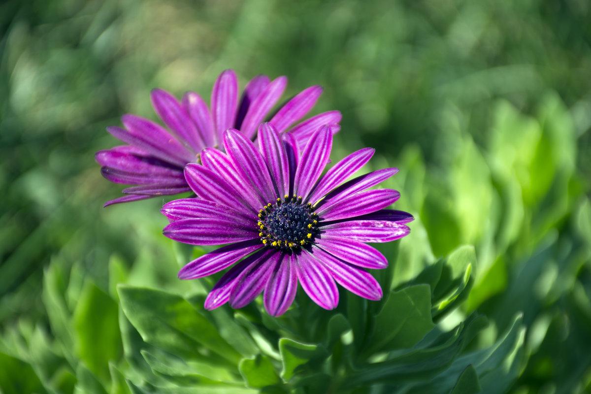 Осенние цветы 2 - Gudret Aghayev