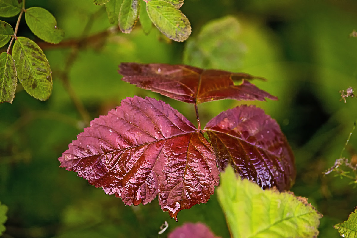 Осенний дождичек - Татьяна Губина