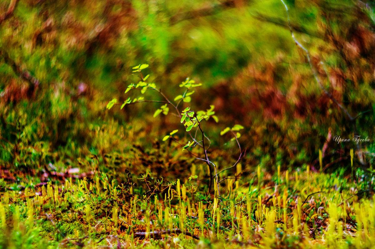 волшебный лес - Ирэн