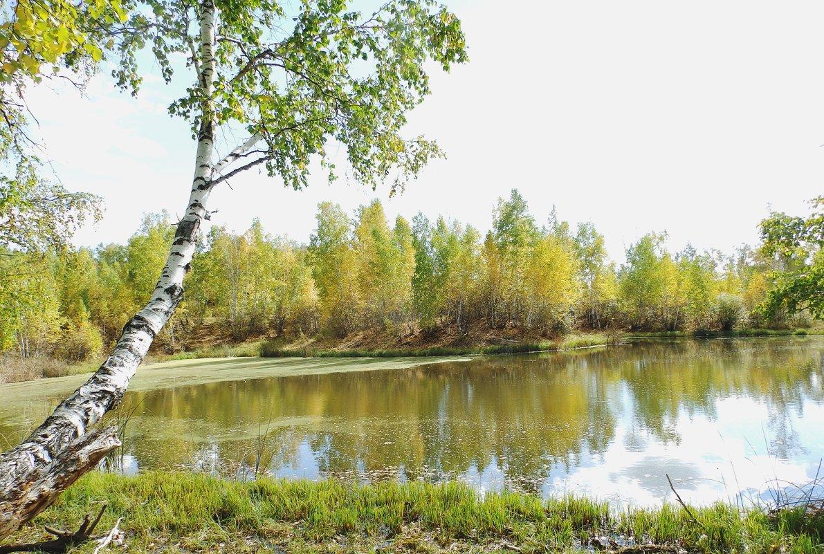 лесное озеро - Анна