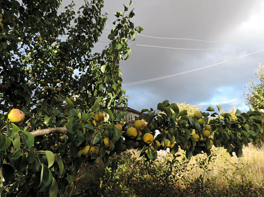 Перед грозой. - bemam *