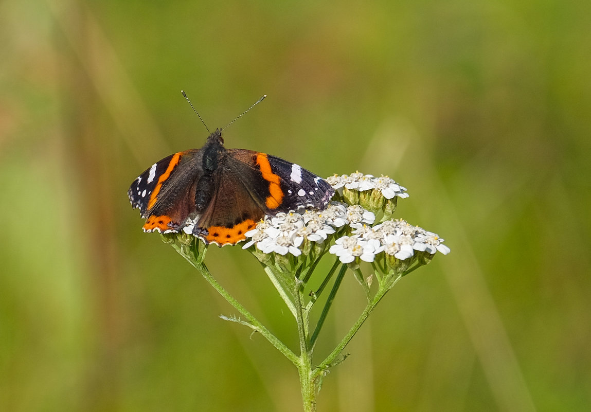 А бабочка крылышками бяк-бяк-бяк..... - Олег Кулябин