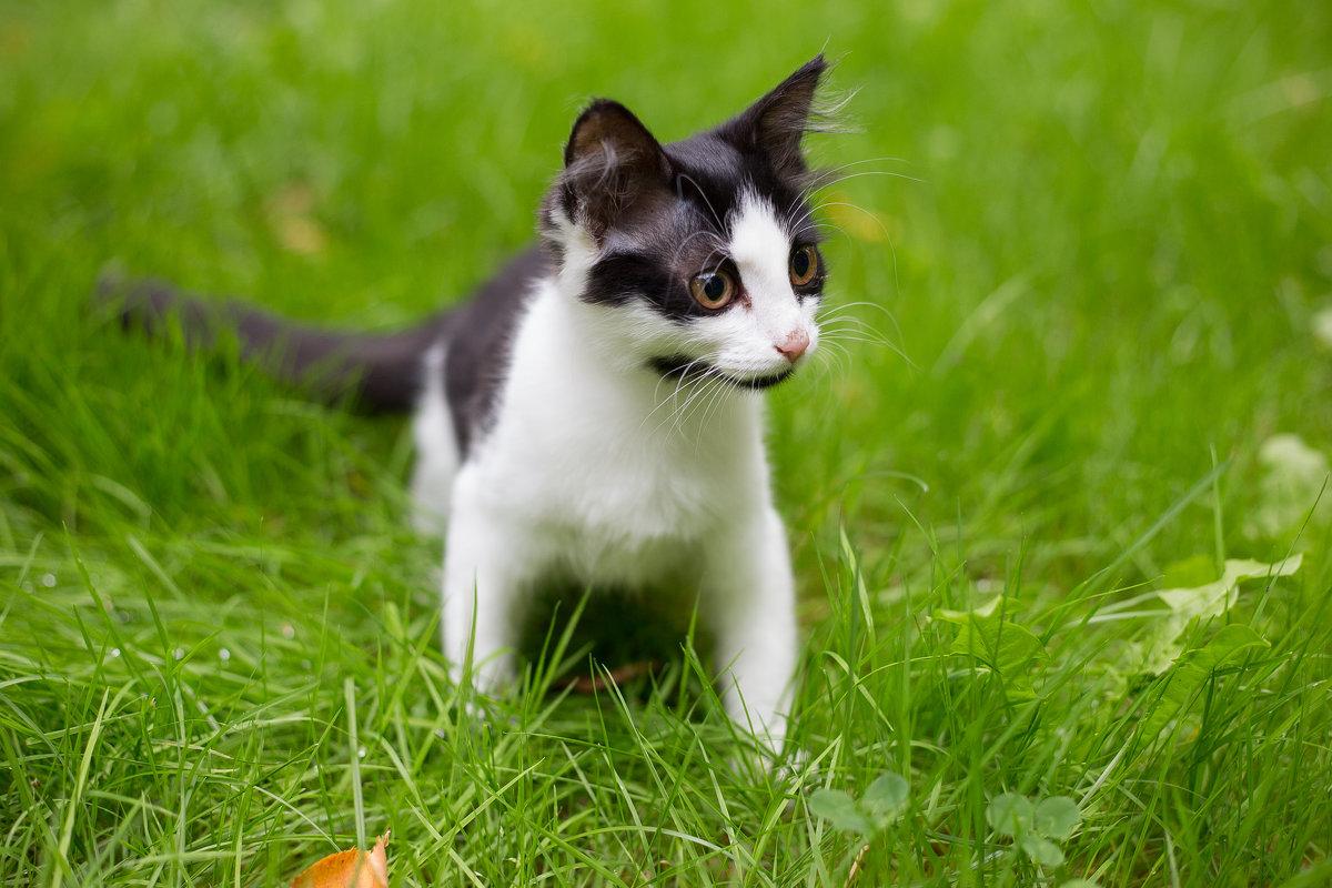Кошечка вам в ленту - ira