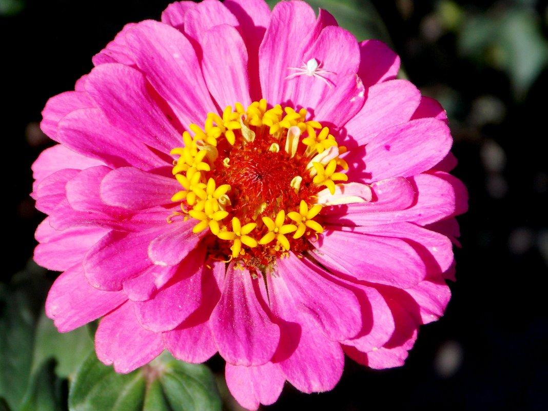 Цветы - Кристина Виноградова