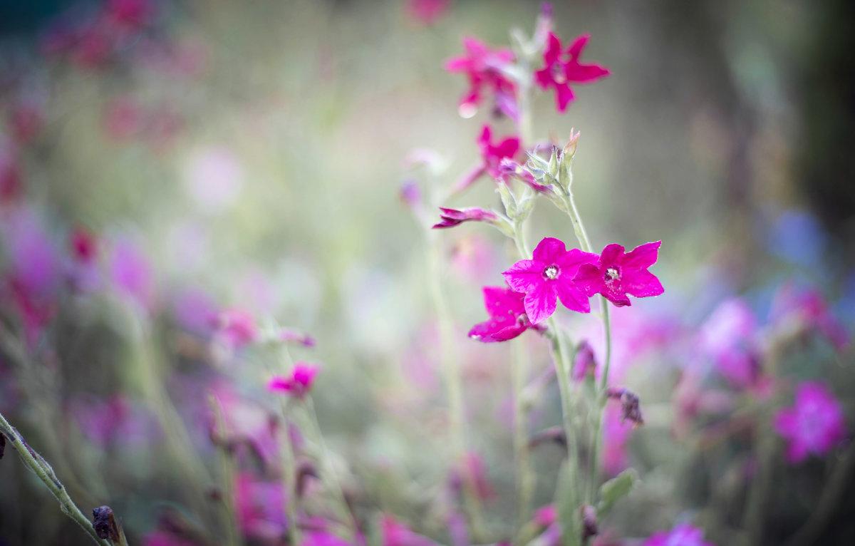 Цветочки - Инна Голубицкая