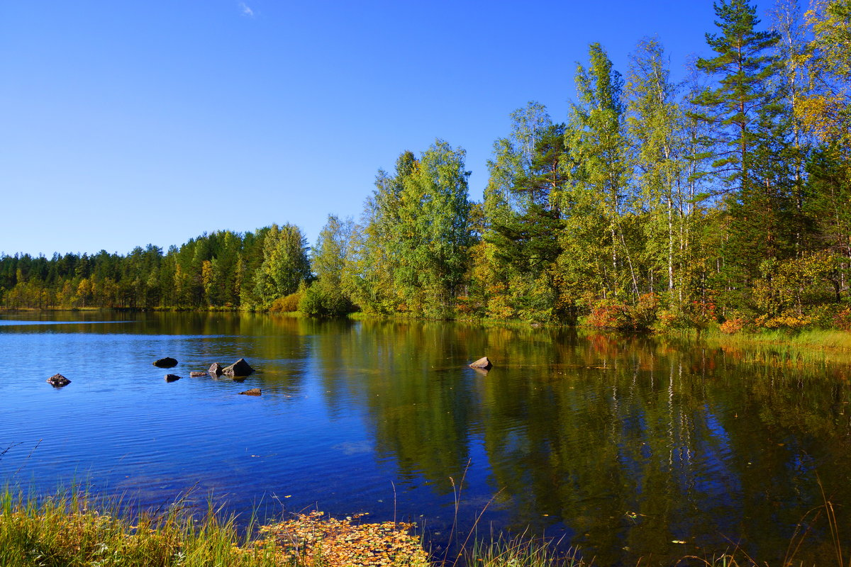 ..Светлое озеро... - Ольга Cоломатина