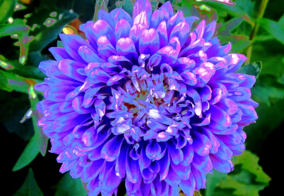 осенние цветы - Надежда