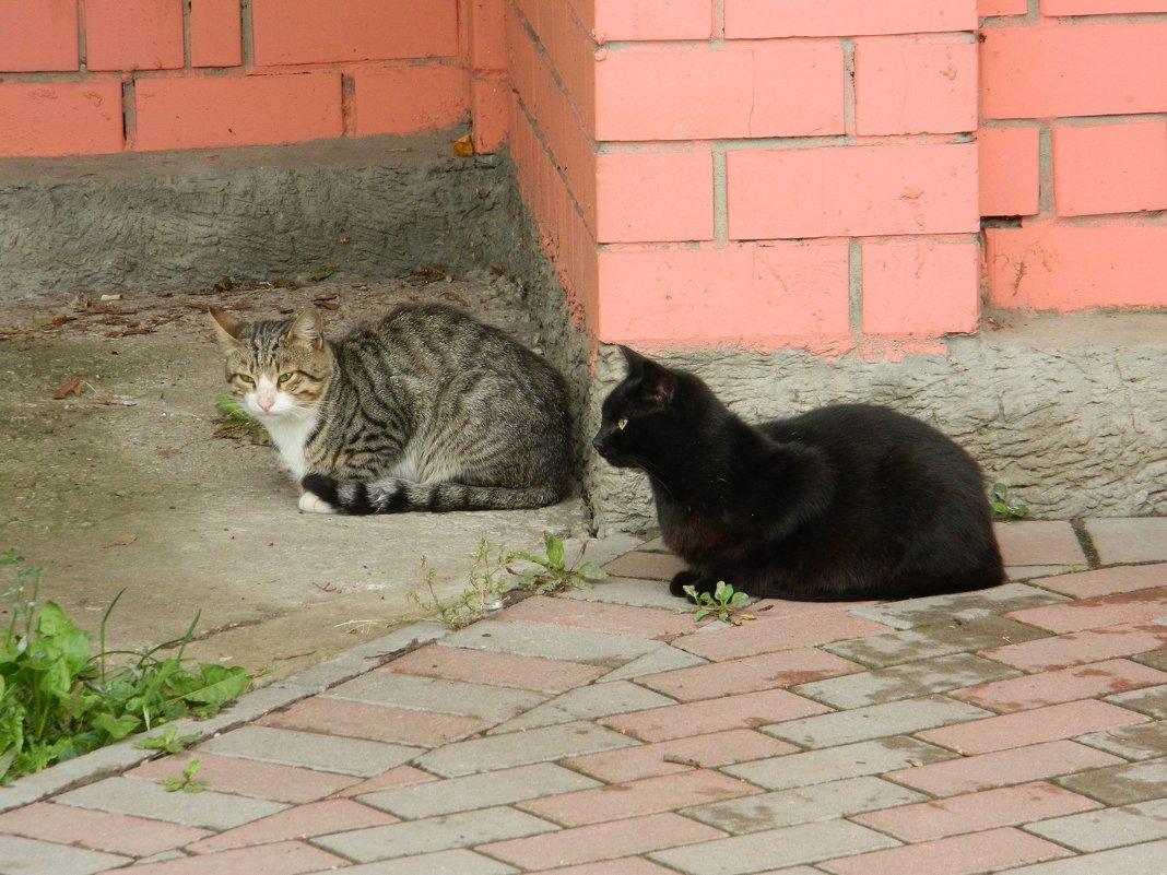 Два кота - Andrew