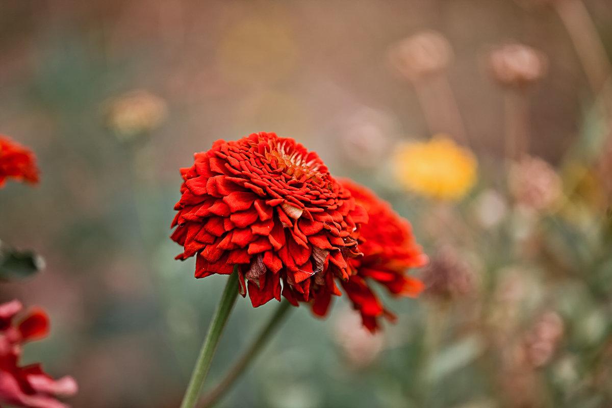 Красный цветок - Татьяна Губина