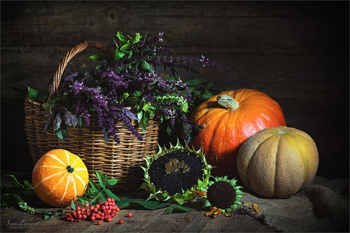 Осенний натюрморт с тыквами и дыней - Ирина Лепнёва