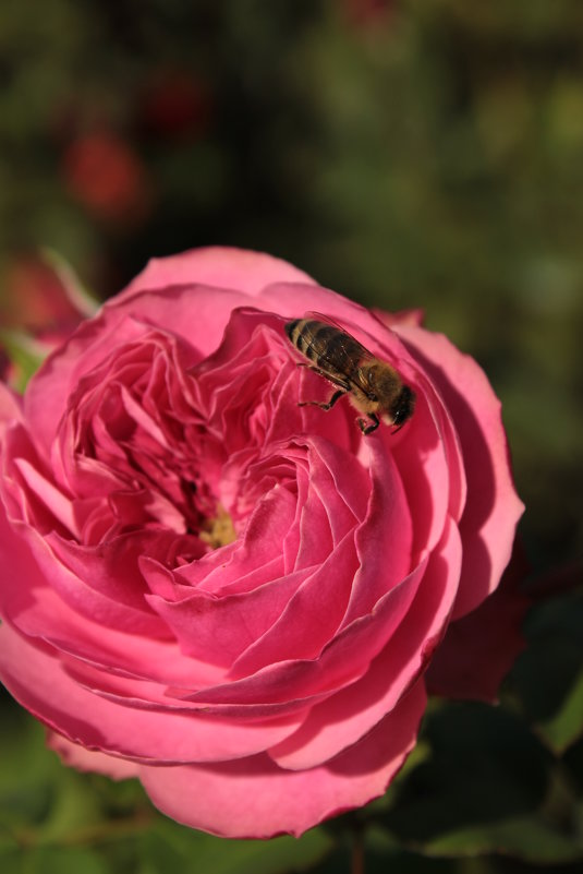 пчелка Майя - Анна Шишалова