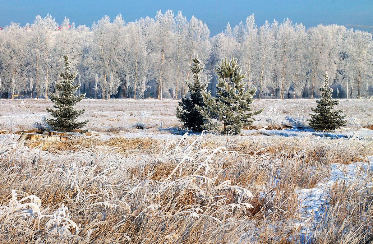 Морозное утро нового дня - Екатерина Торганская