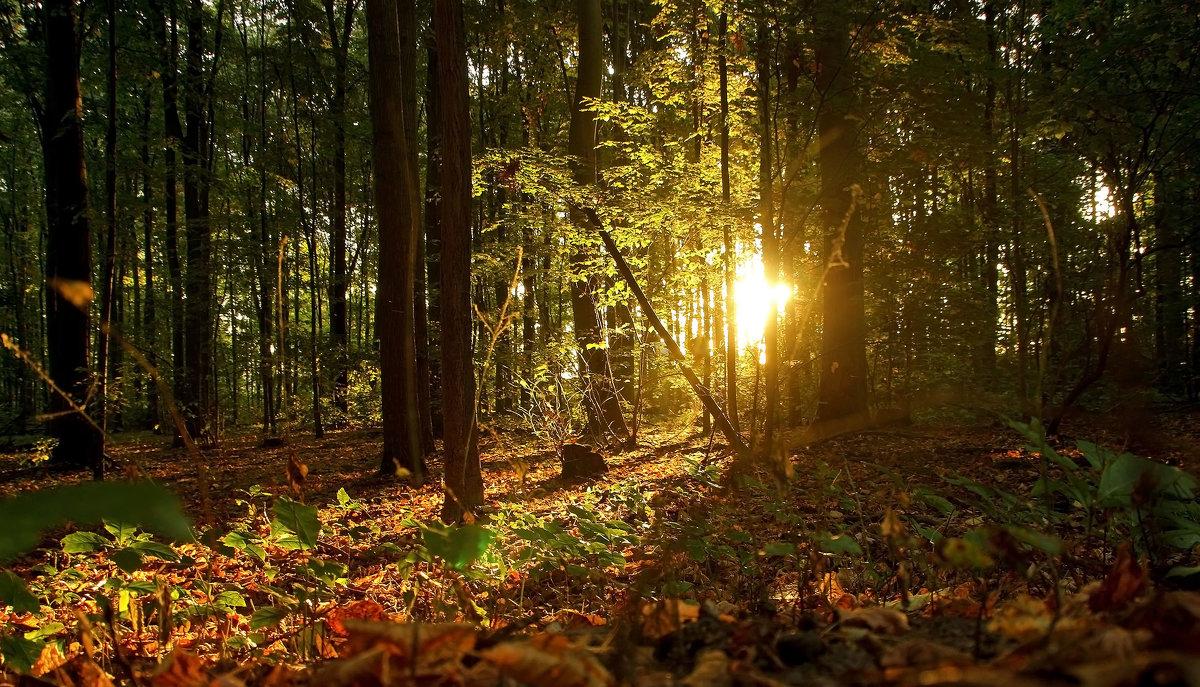 Костёр в лесу - Alexander