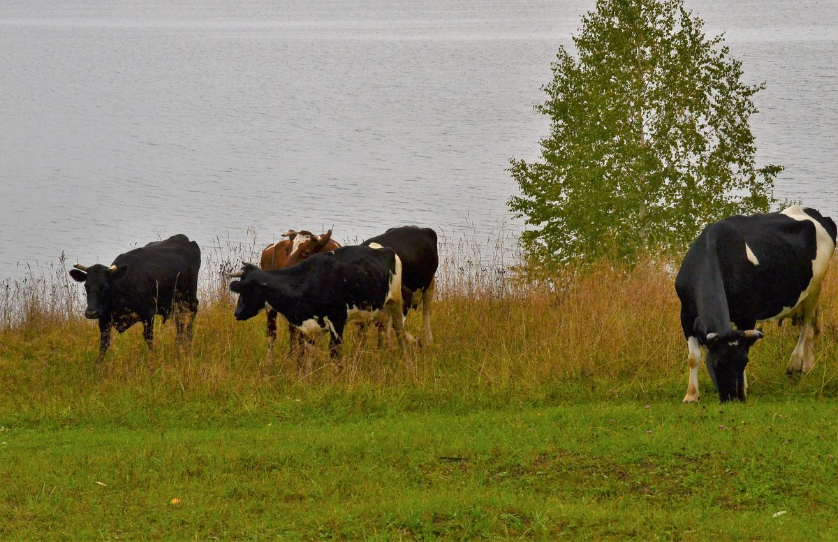 последняя свежая трава - petyxov петухов