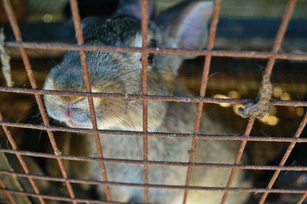 rabbit - khovda noresnaf
