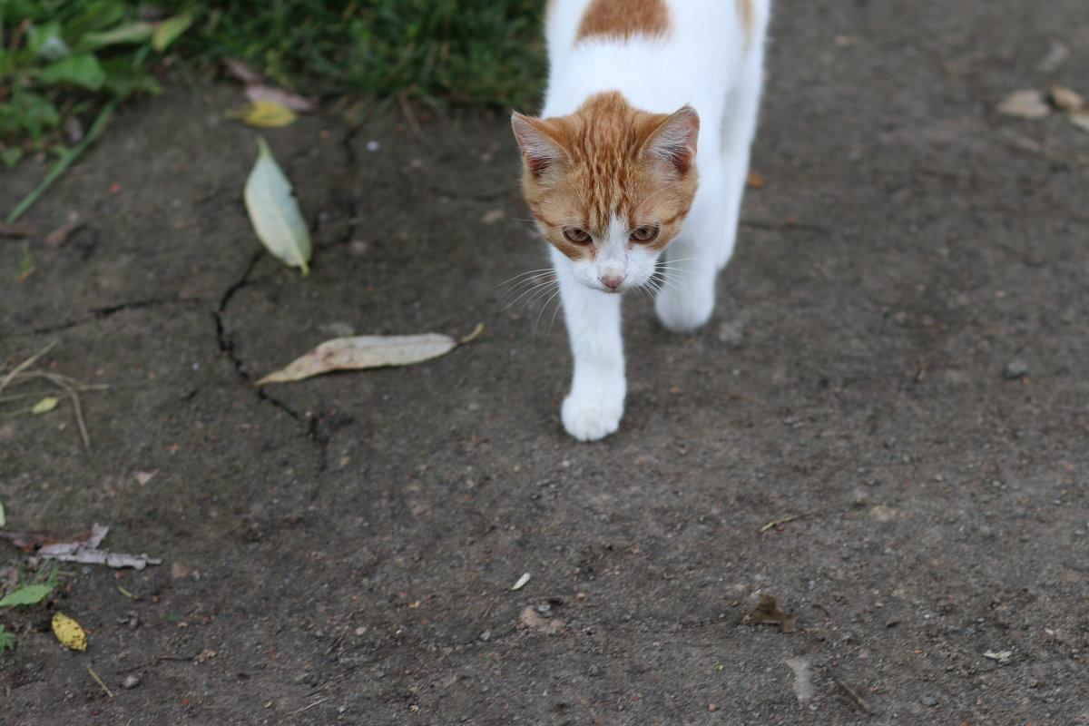 на прогулке - Ольга